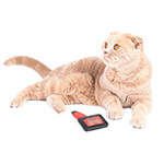 Brushing your cat's fur