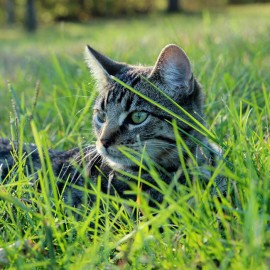 Worming in Cats