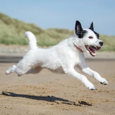 5 Ways to Strengthen Your Dog's Bones