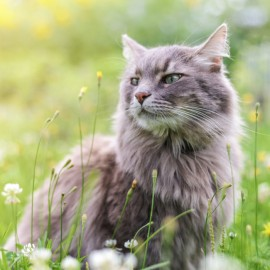 What Are Cats Allergic To?