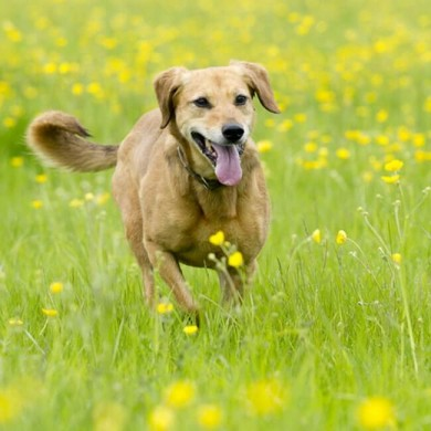 Worming in Dogs